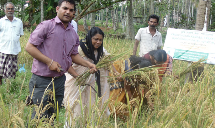 1.Harvest-mela---SRI-method-of-paddy-cultivation.jpg