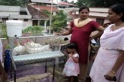 KVK-popularised-layer-poultry-in-cage-system-among-urban-house-wives