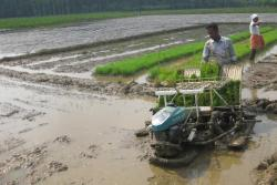 Paddy-transplanter-in-operation